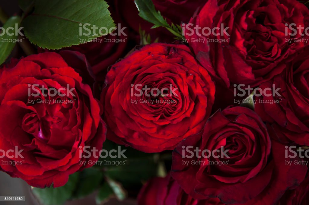 Natural red rosesbeauty blooming bouquet decoration background stock photo