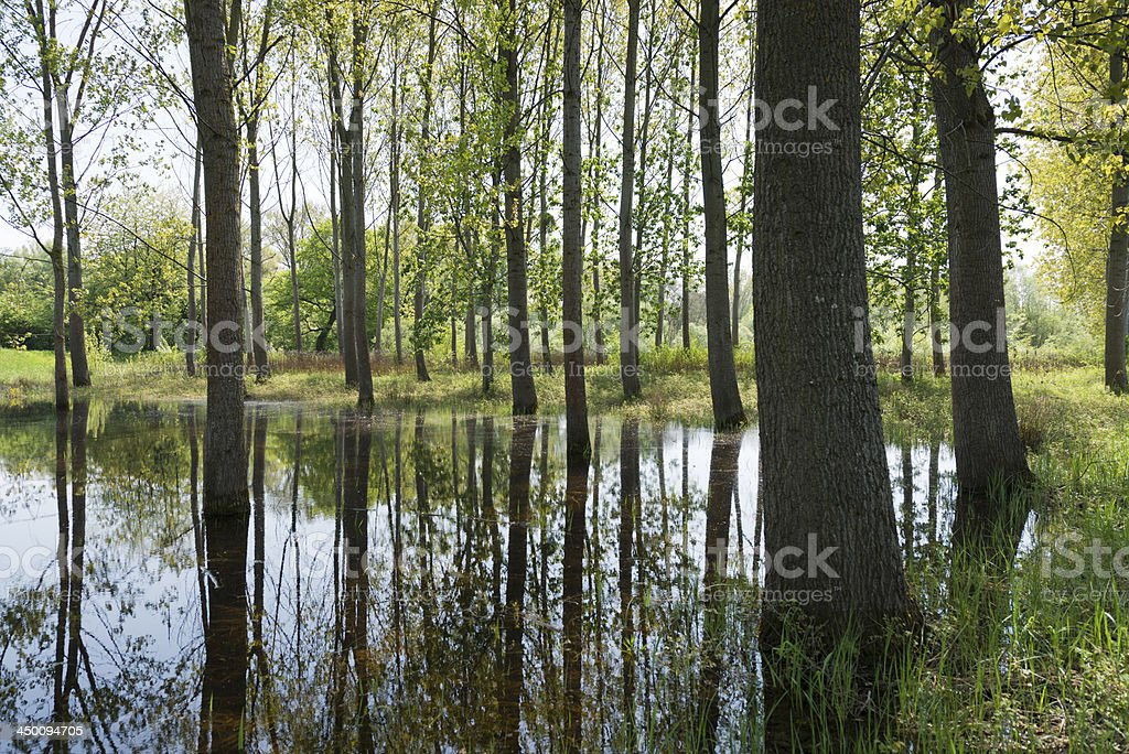 natural reserve , Sauerdelta Alsace France stock photo