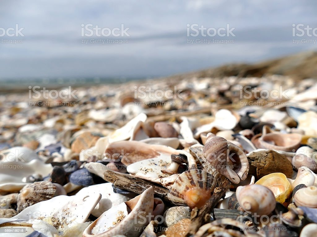 Natural sand and shells with defocused background stock photo