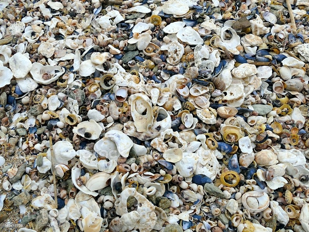 Natural sand, mussels shelss, oyster shells and other shells bac stock photo