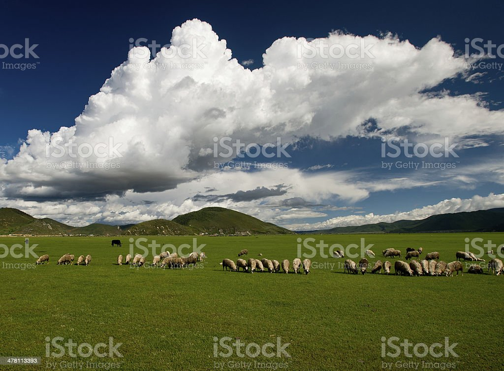 Natural scenery of the Qinghai-Tibet Plateau royalty-free stock photo