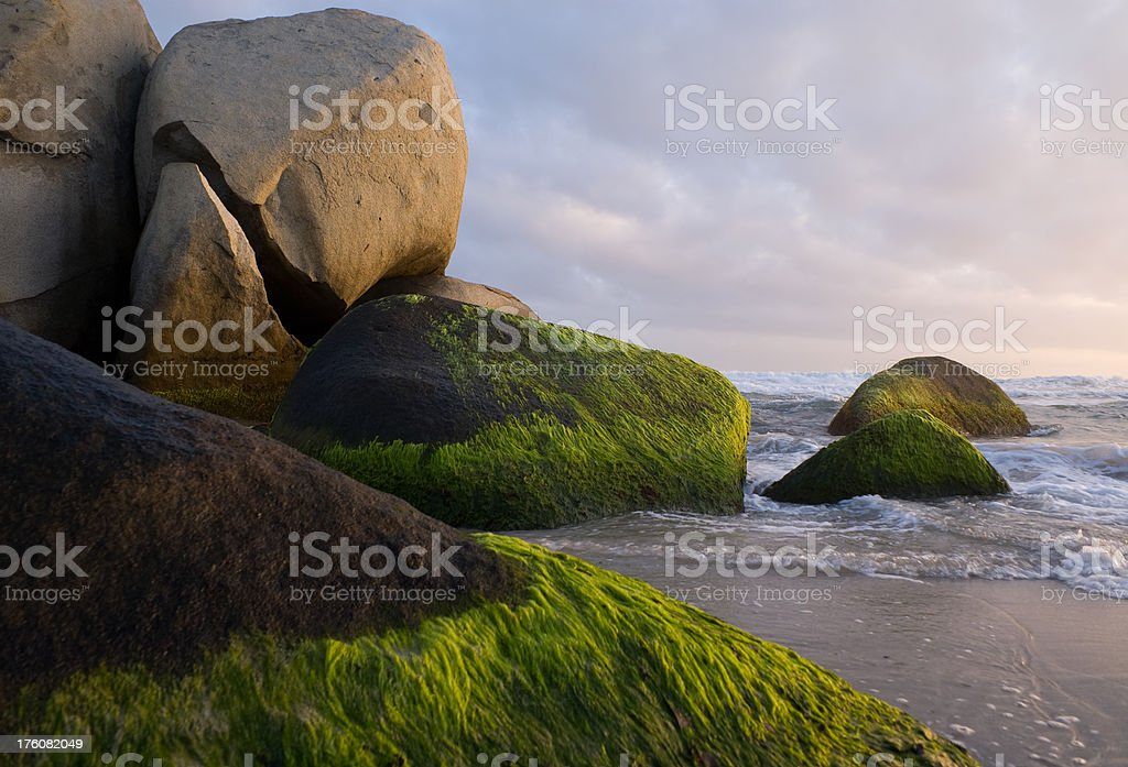 Natural sculpture on Caribbean  beach royalty-free stock photo