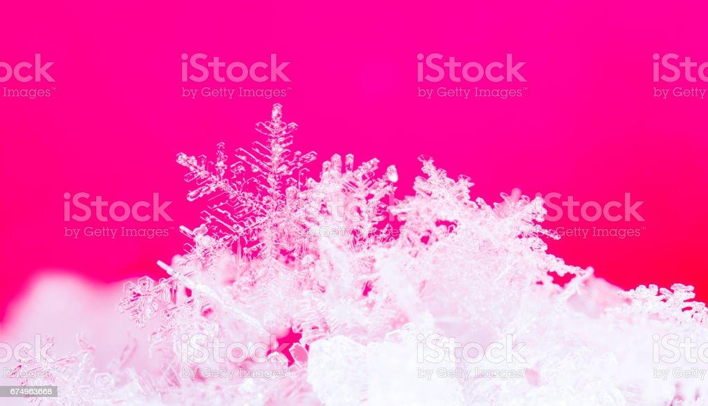natural snowflakes on snow stock photo