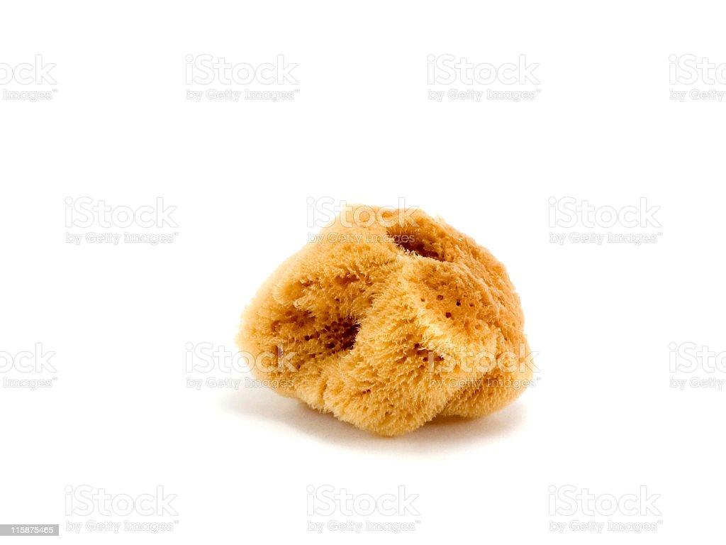 Natural Sponge royalty-free stock photo