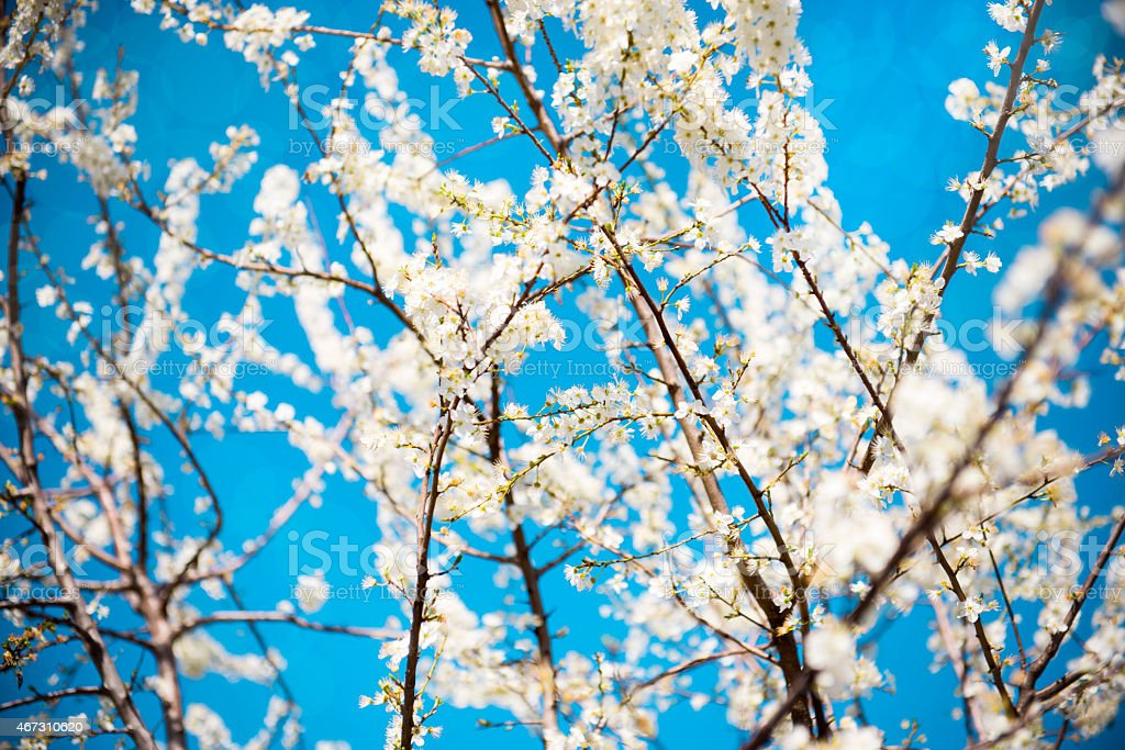 Natural Spring Blossom In the Nature on the Beautiful Day stock photo