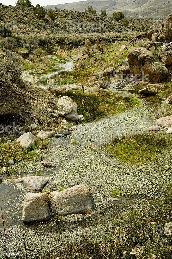Natural Spring, Nevada Desert stock photo
