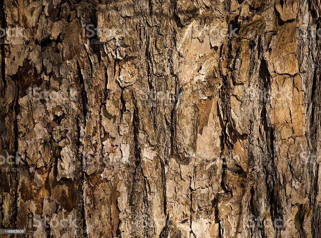 Natural texture tree bark royalty-free stock photo