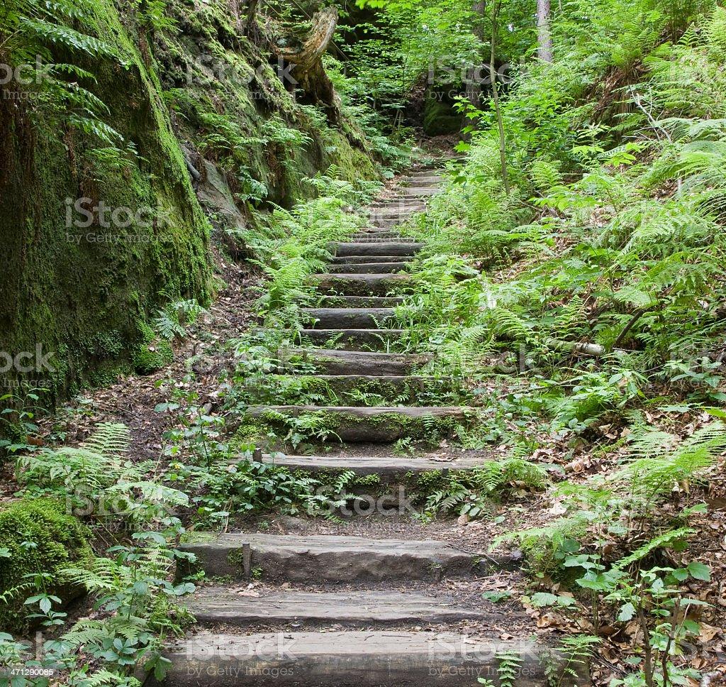 Natural Trail royalty-free stock photo