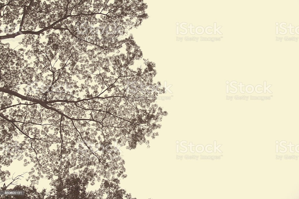 A natural tree neutral background image stock photo