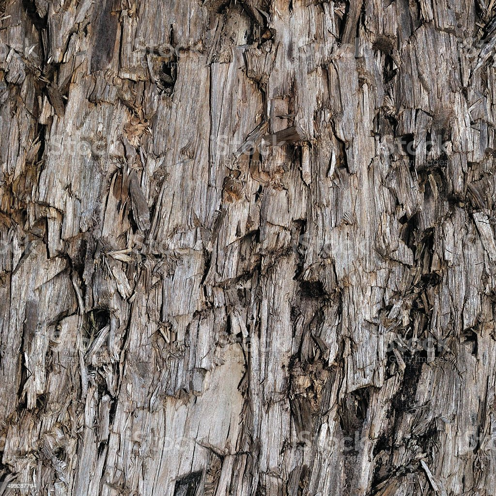 Natural Weathered Grey Taupe Brown Cut Tree Stump Texture Background stock photo