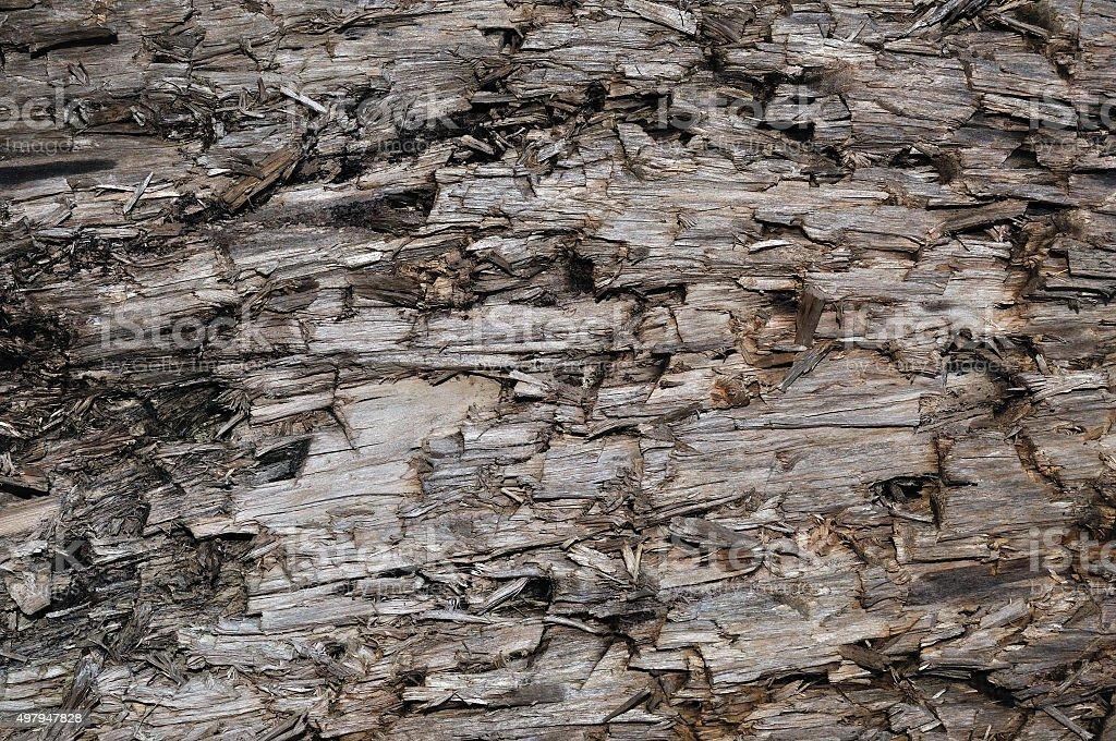 Natural Weathered Grey Taupe Brown Cut Tree Stump Texture, Horizontal stock photo