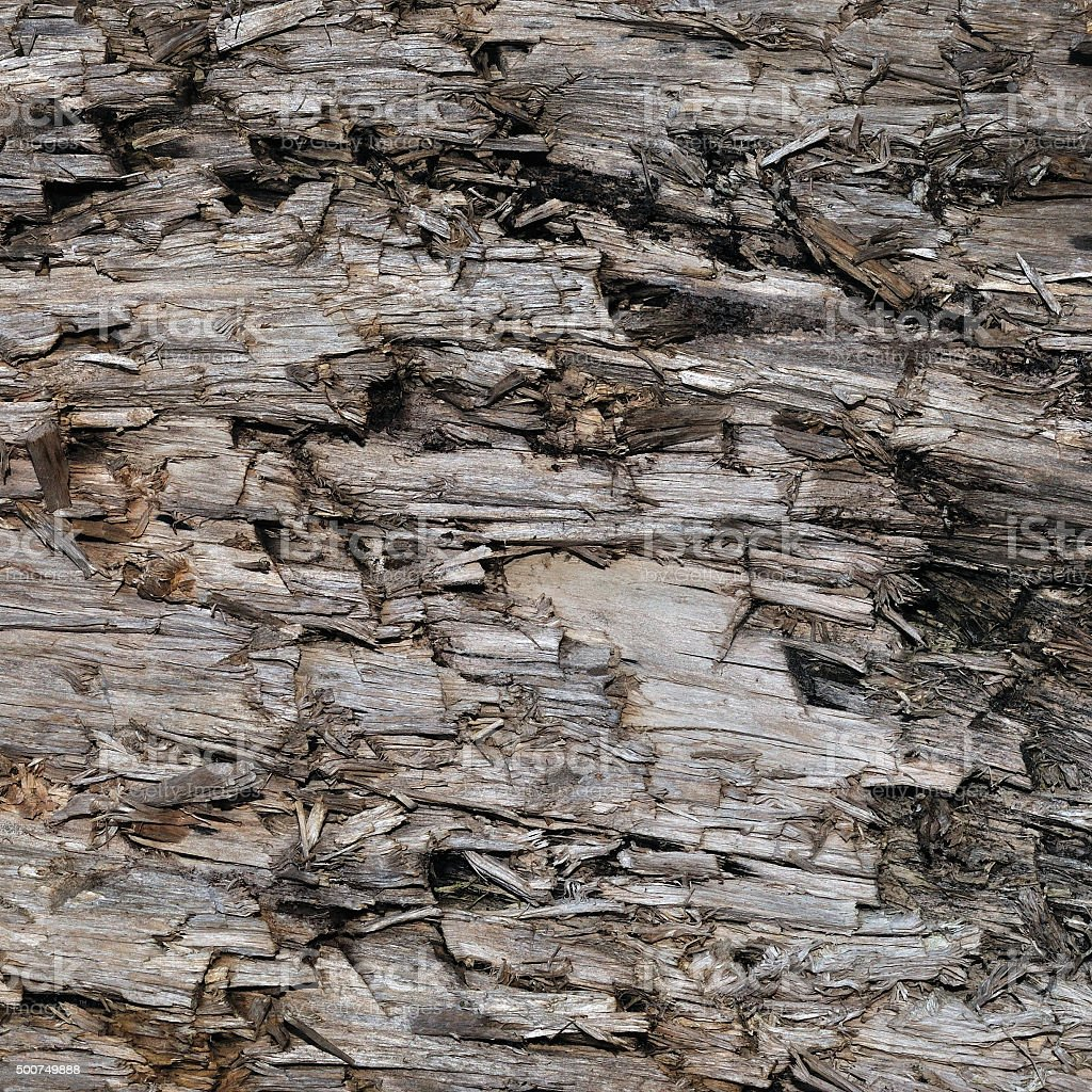Natural Weathered Grey Taupe Brown Cut Tree Stump Texture, Large stock photo