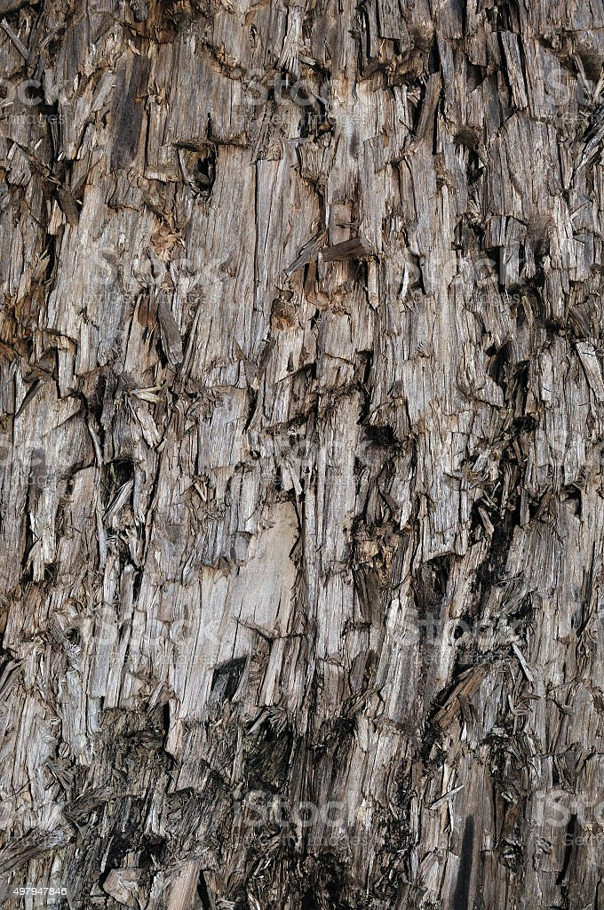 Natural Weathered Grey Taupe Brown Cut Tree Stump Texture, Vertical stock photo