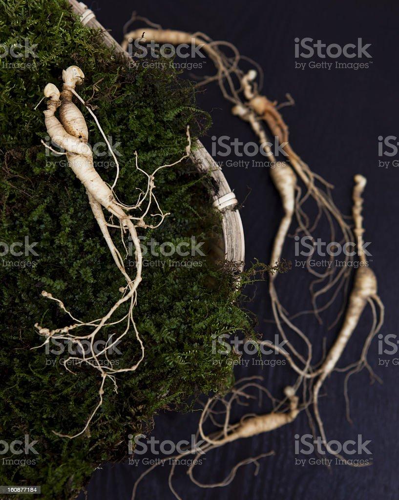 natural wild ginseng royalty-free stock photo