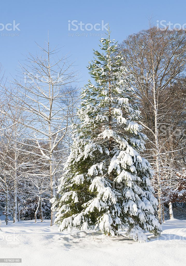 Natural Winter Wonderland stock photo