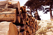 Natural wood background, wood, firewood stacked and ready for us