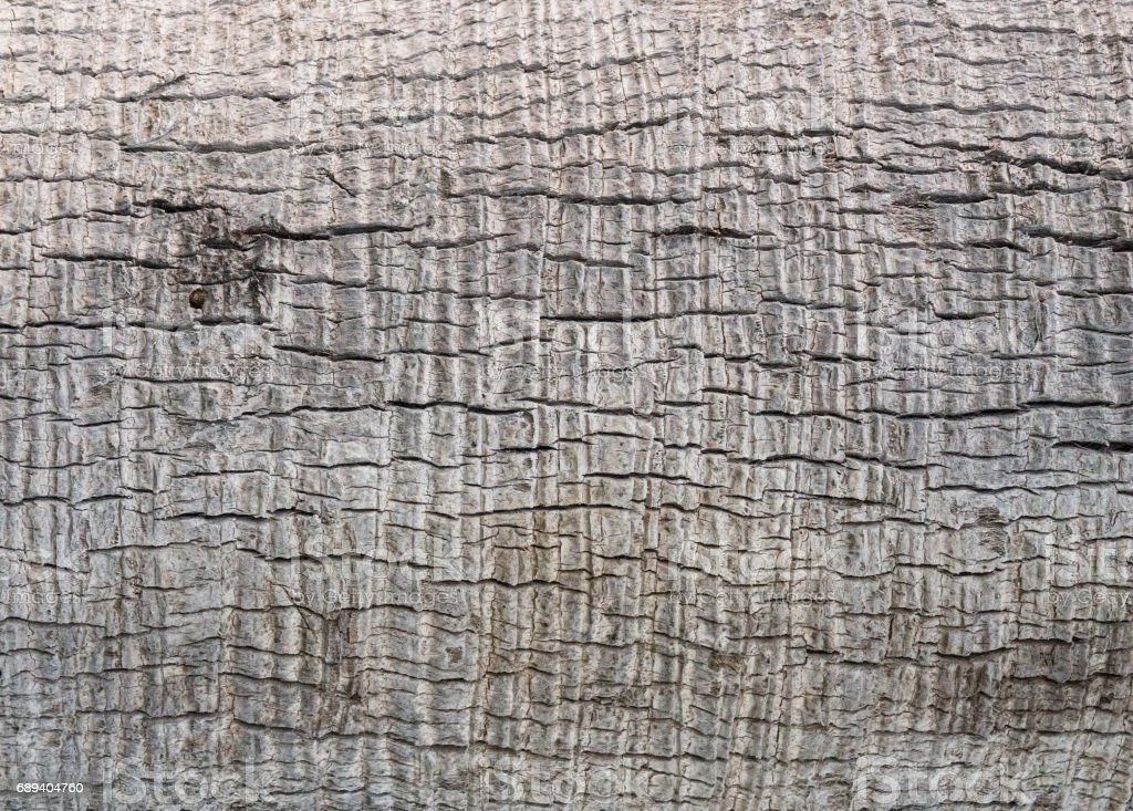 Natural wood texture stock photo