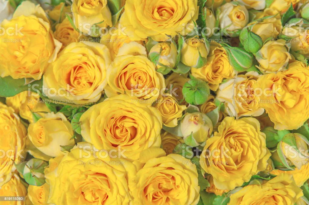 Natural yellow roses beauty blooming bouquet decoration background stock photo
