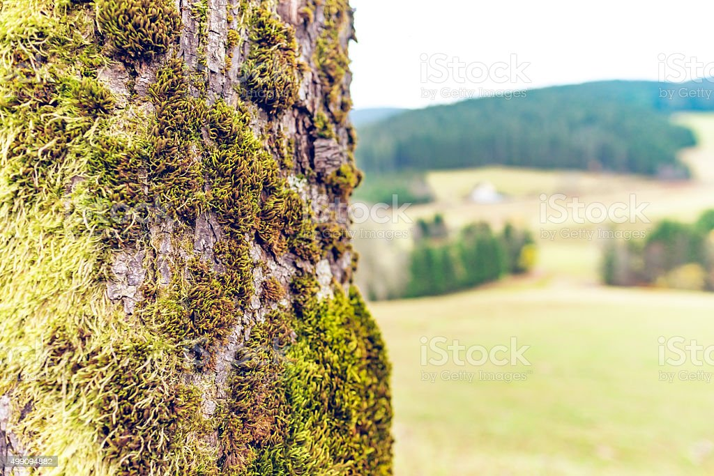 Nature Abstract from Black Forest Trees, Germany stock photo
