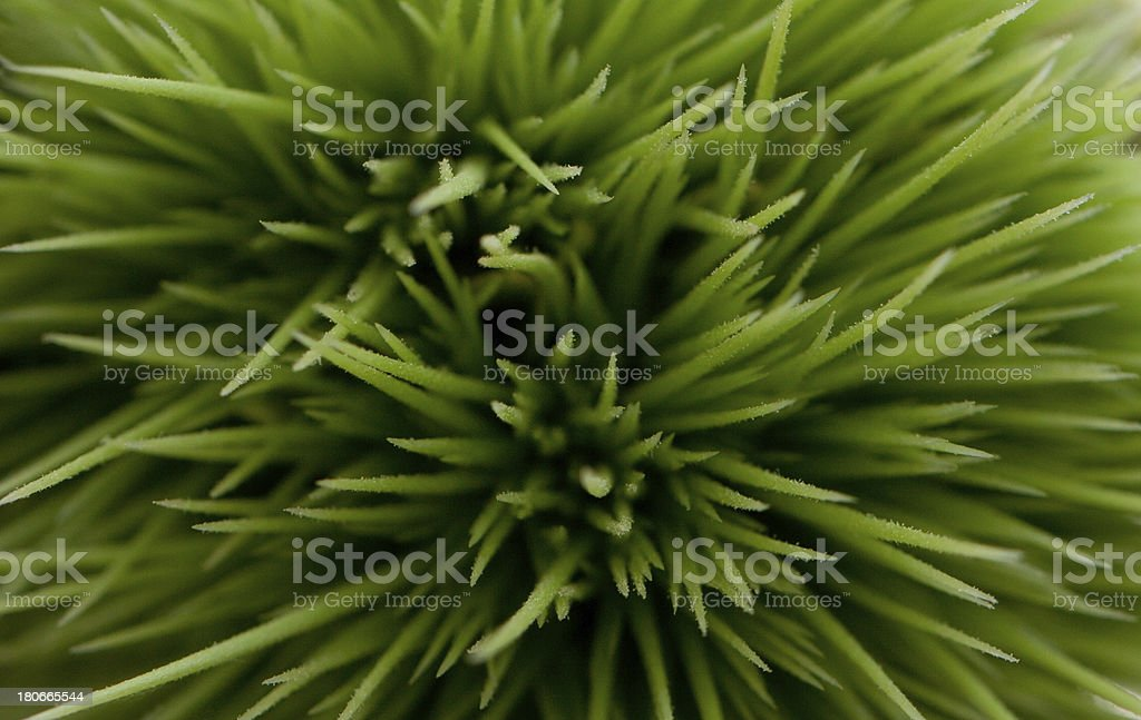 Nature abstract royalty-free stock photo