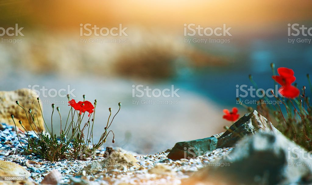 nature and it's beauty stock photo