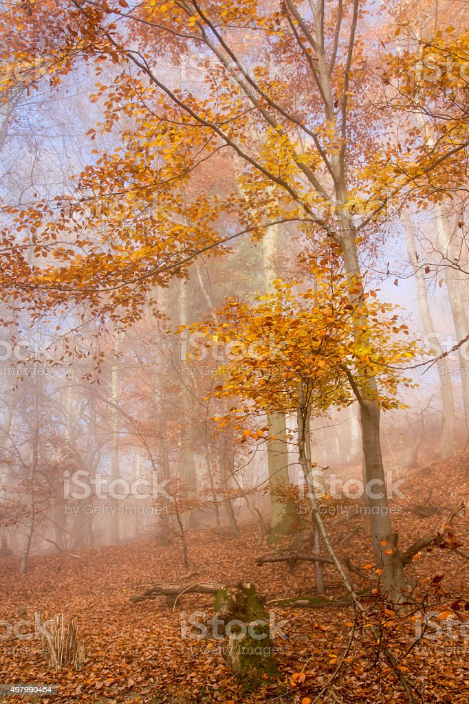 Nature Autumn Colorful Forest stock photo