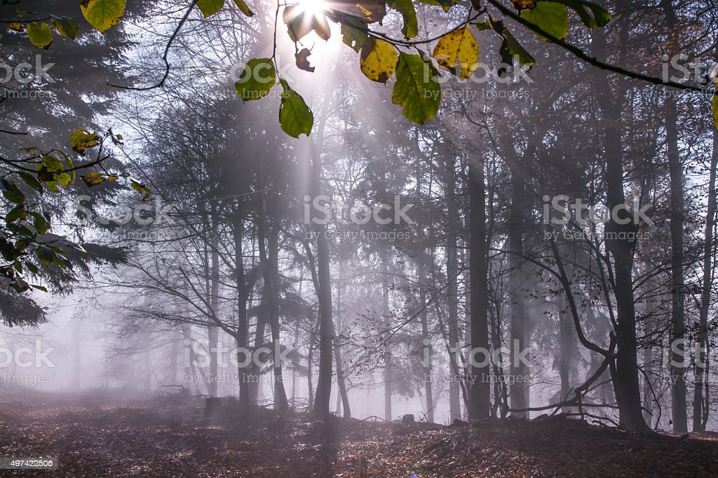 Nature Autumn Fog Forest stock photo