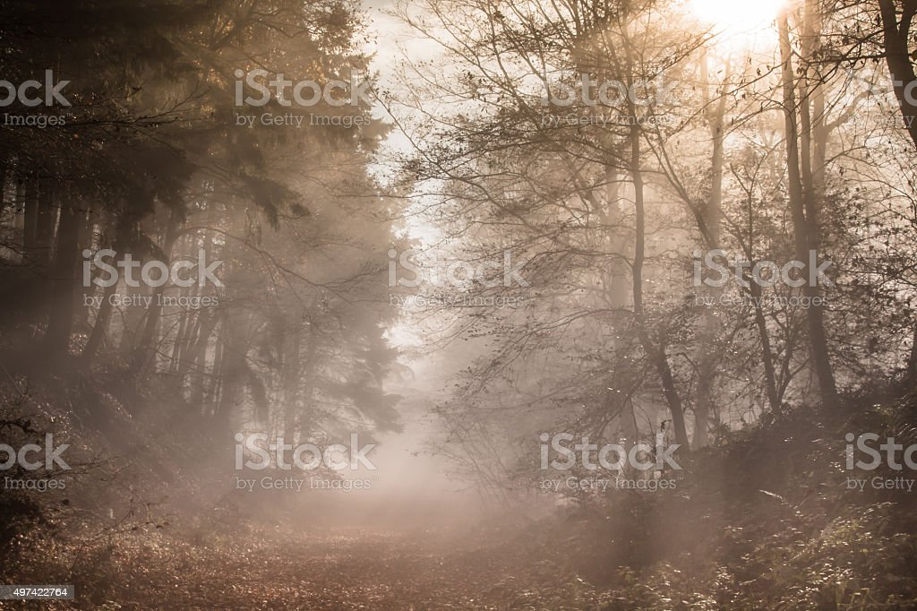 Nature Autumn Fog Forest stock photo