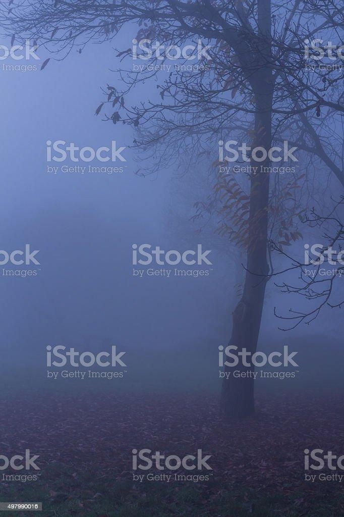 Nature Autumn Fog Tree Landscape stock photo