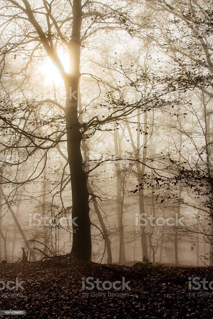 Nature Autumn Foggy Forest stock photo