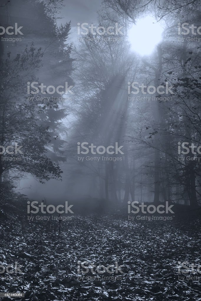 Nature Autumn Forest Fog and Sunbeams stock photo