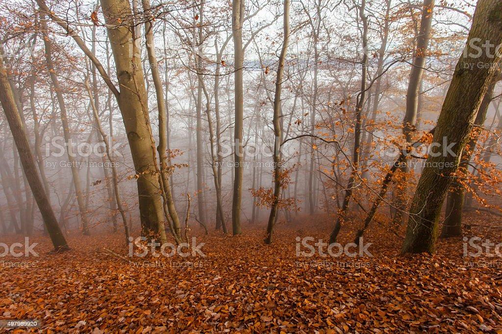 Nature Autumn Misty Forest Landscape stock photo