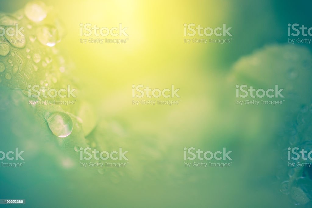 Nature Background - Abstract Leaves Dew Drops & Sunshine stock photo