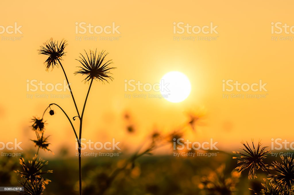 nature background flowers in on orange sunset. stock photo