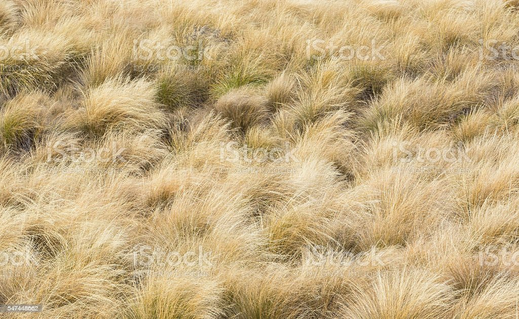 Nature background of Tussock on Lindis Pass stock photo