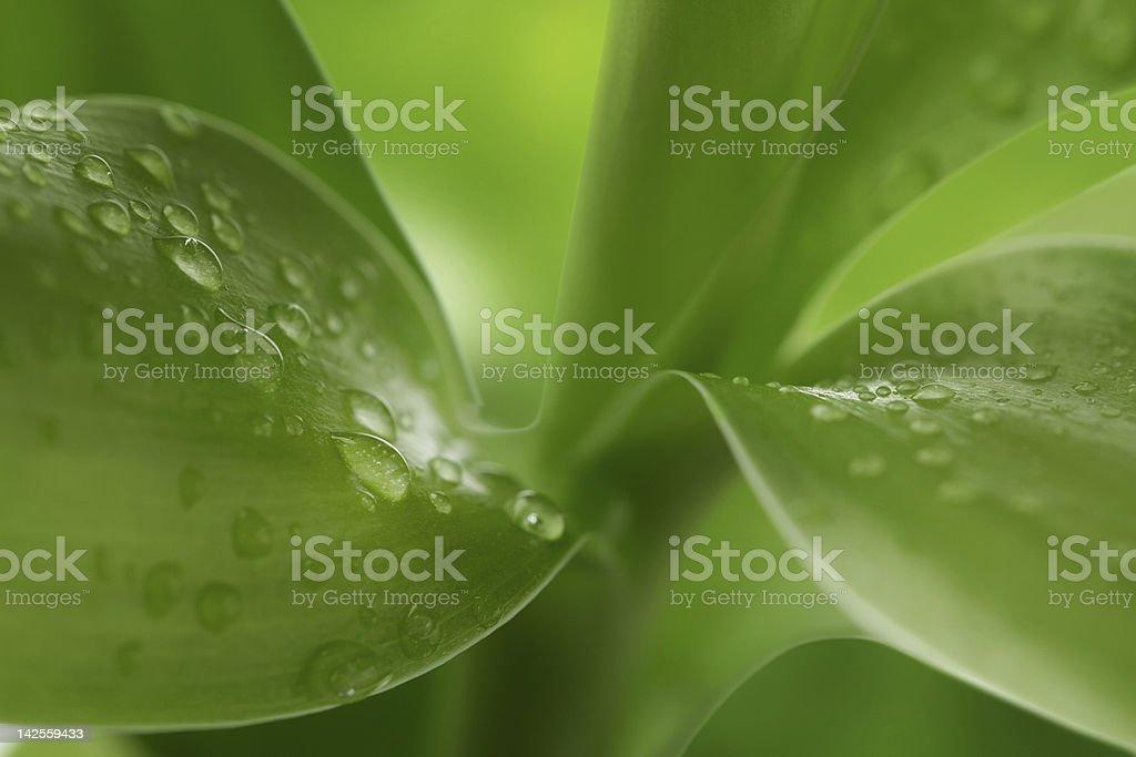 Nature background royalty-free stock photo