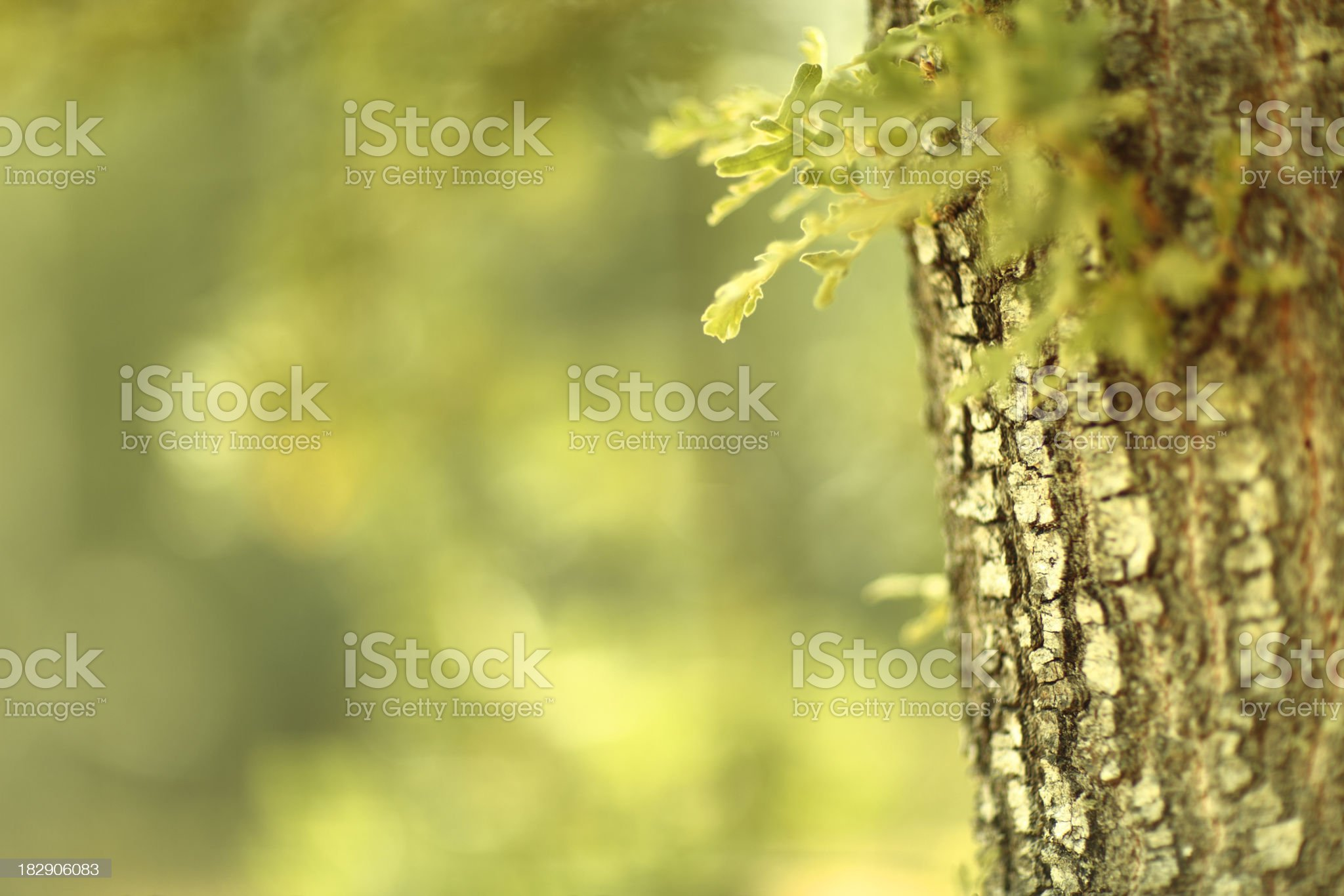 Nature background royalty-free stock photo