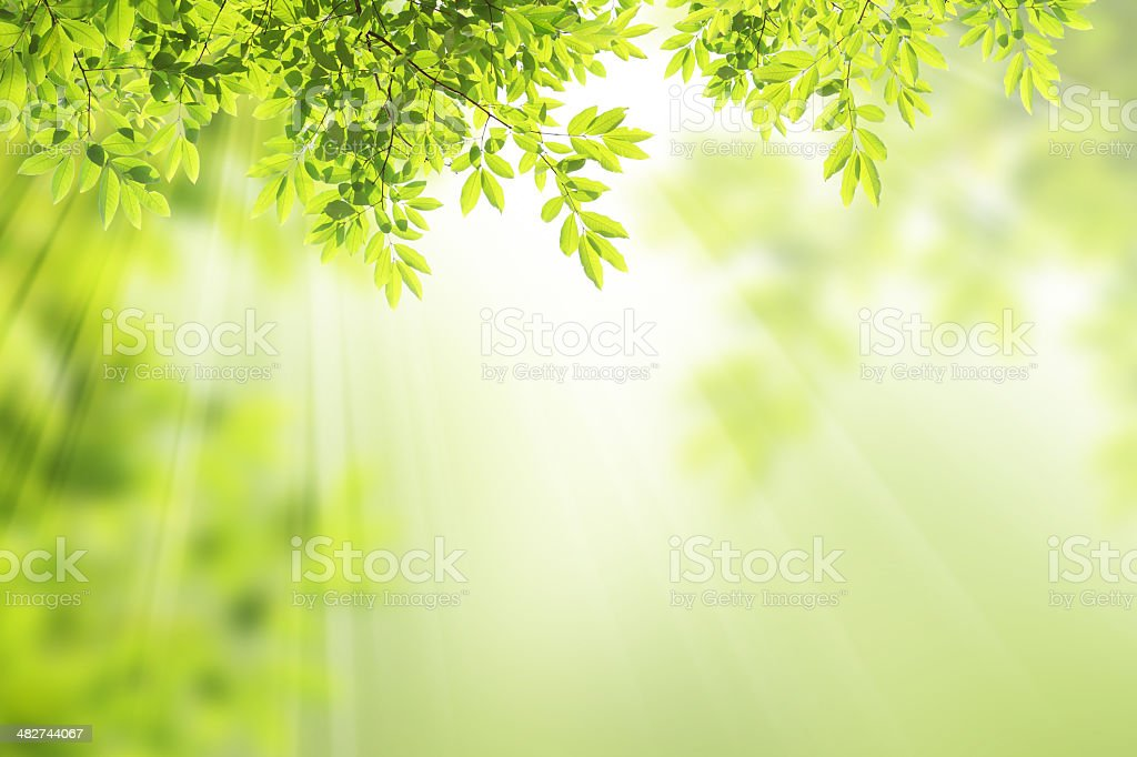 nature background. stock photo