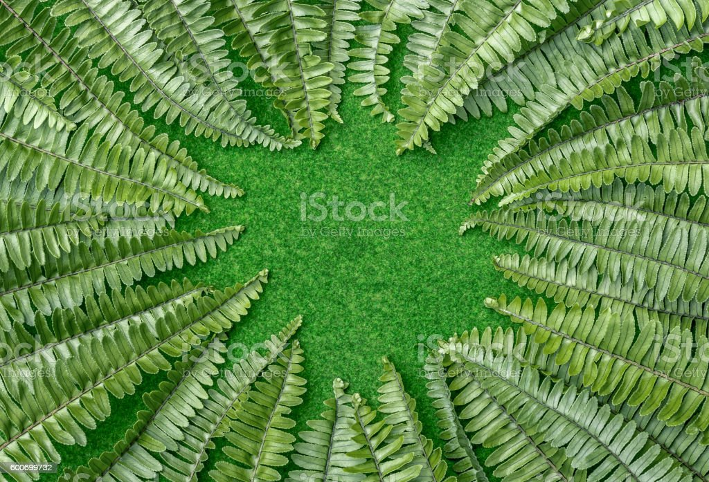 nature background stock photo