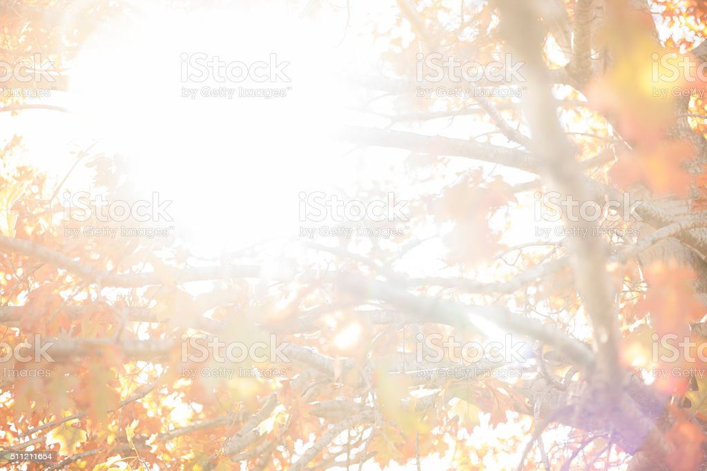 Nature Background: Tranquil scene of oak leaves in fall. stock photo