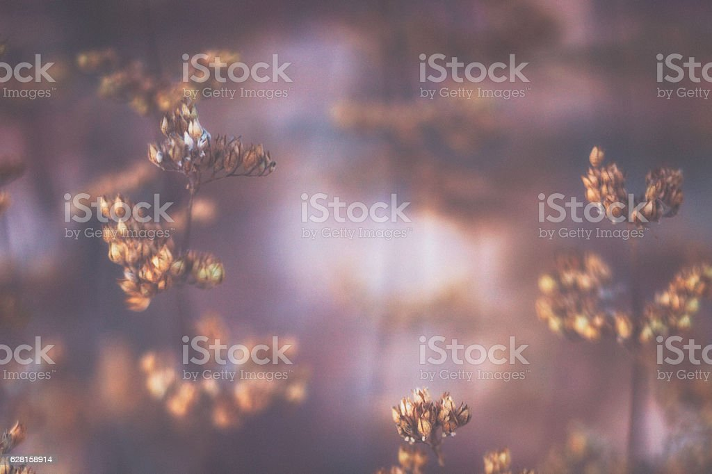 Nature background with decaying winter branches in fresh snowfall stock photo