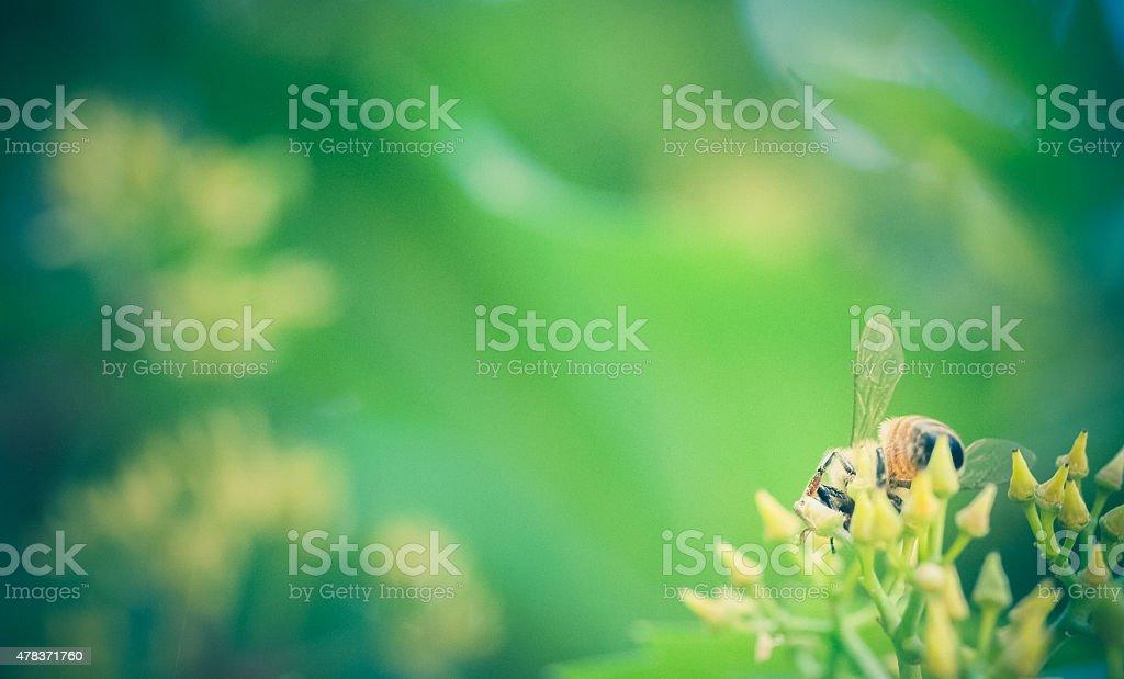 Nature background with honey bee gathering nectar stock photo