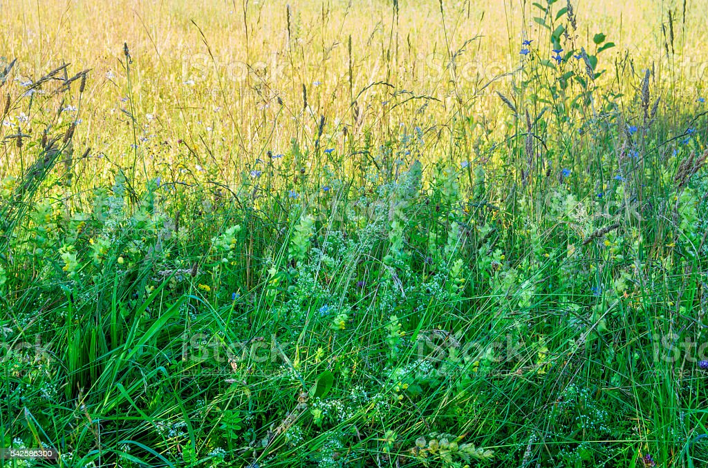 Nature Background with meadow royalty-free stock photo