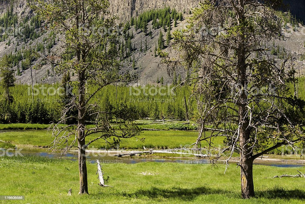 Nature:  Beautiful landscape in Yellowstone National Park. royalty-free stock photo