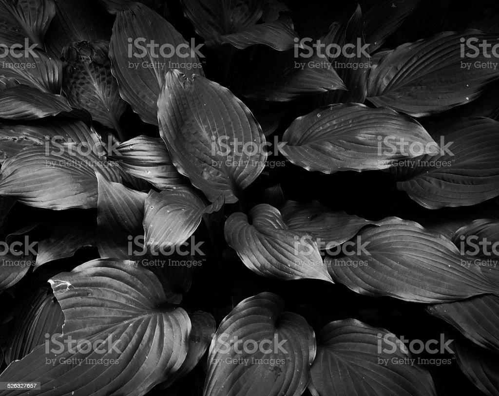 Nature black and white stock photo