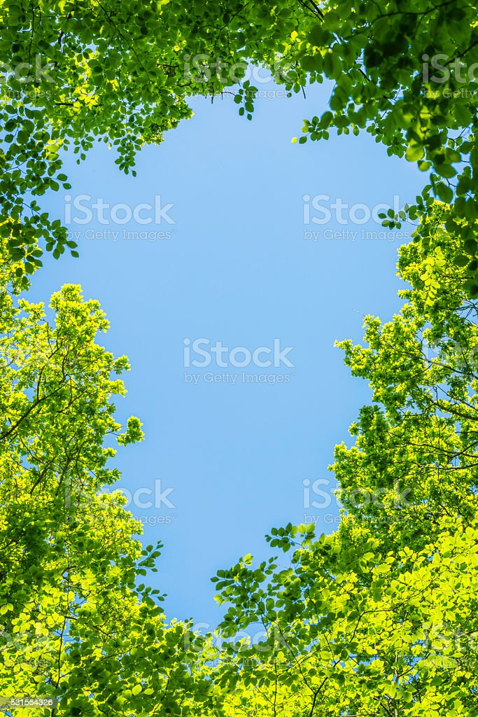 Nature border frame blue summer sky vibrant green forest foliage stock photo