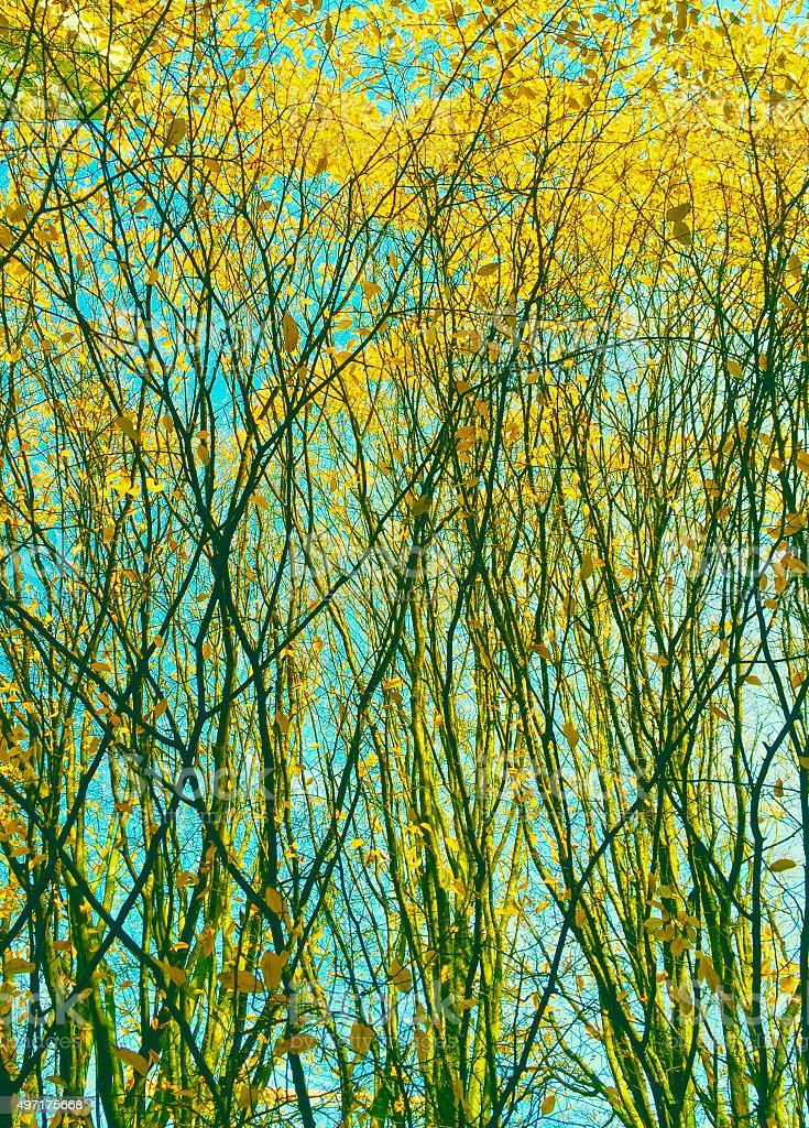 Nature branches abstract royalty-free stock photo