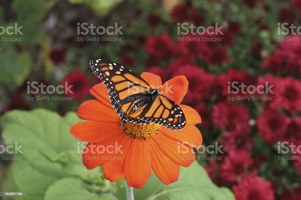 Nature: Butterfly stock photo