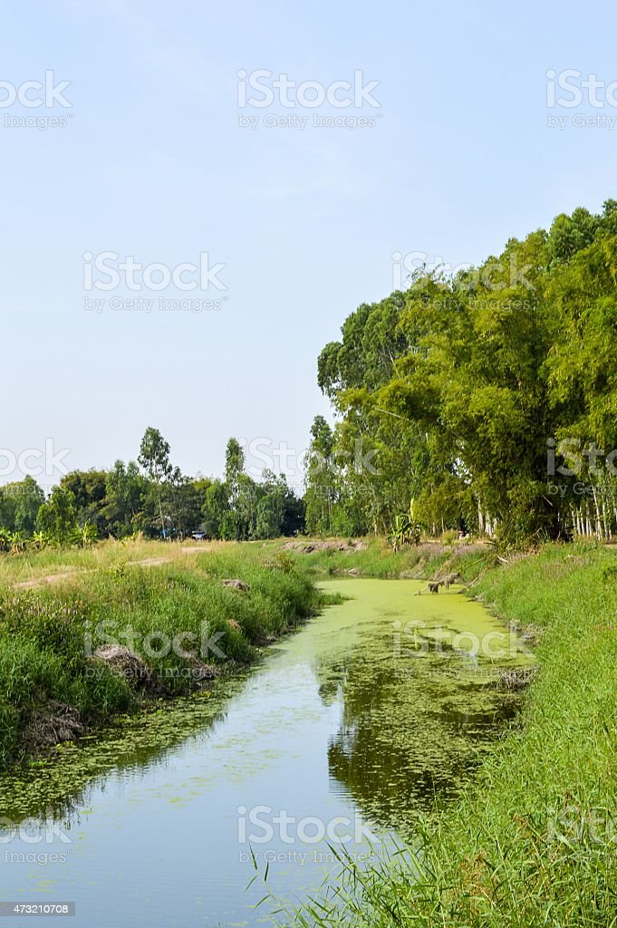 nature canal stock photo