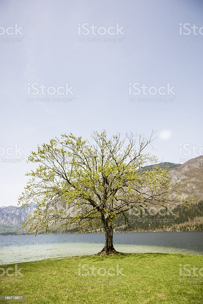 Nature concept royalty-free stock photo